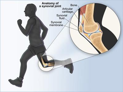 Baxyl Knee